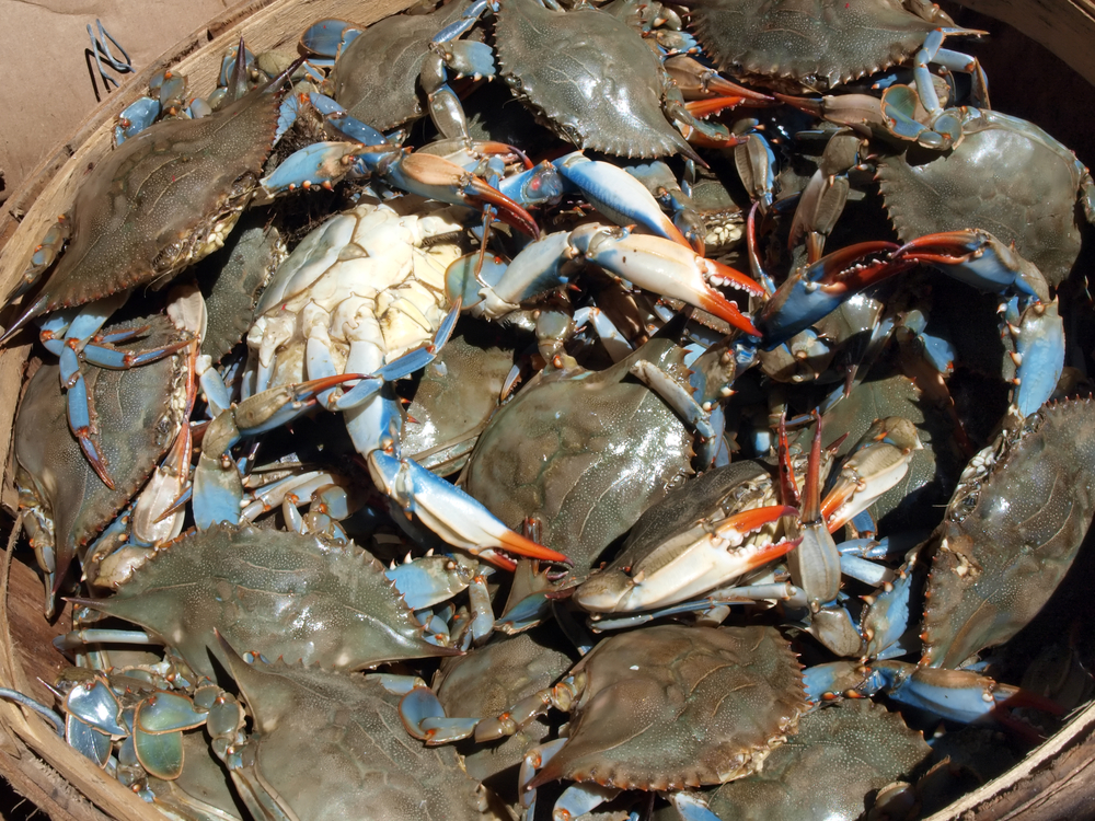 Maryland Crab Meat, Baltimore Crab Meat