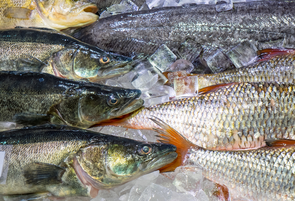 Maryland Fish Suppliers, Baltimore Fish Distributors