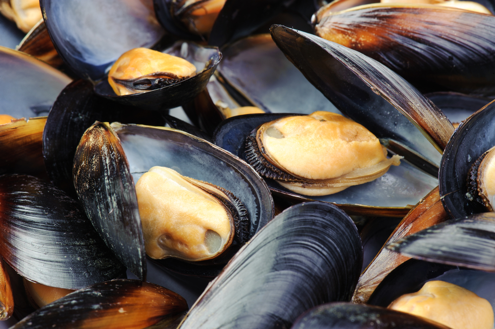 Maryland Mussels, Baltimore Fresh Mussels