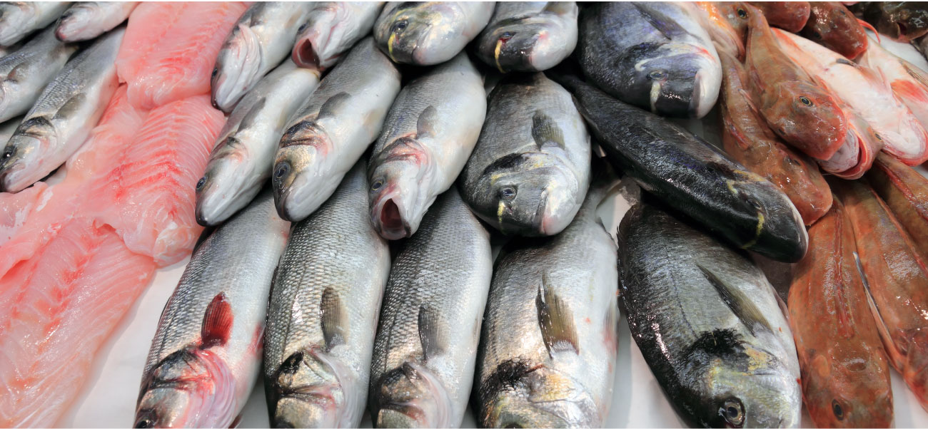 Maryland Wholesale Fish, Baltimore Fish Market